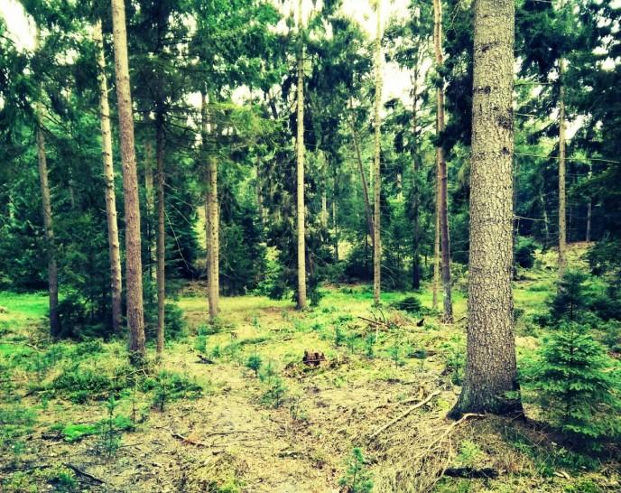 Pilze sammeln – Das Equipment für den Wald